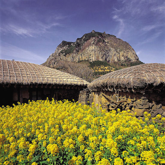 济州岛总面积1826平方公里