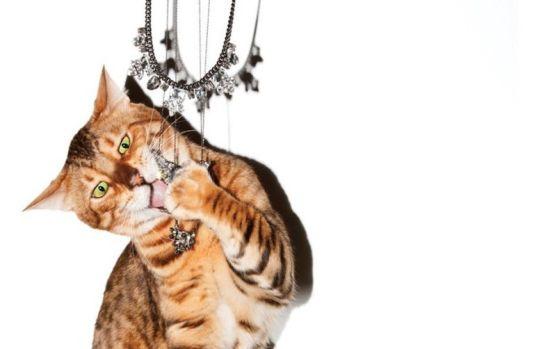 猫咪珠宝大片