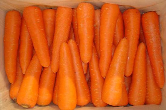 抵抗沙尘暴养生食物三:胡萝卜   胡萝卜也是有效的解毒药物,与体内的汞离子结合能有效降低血液中汞离子的浓度,加速体内汞离子的排出。胡萝卜所含的胡萝卜素,有助于防止血管硬化,降低胆固醇,还可以消除导致人体衰老的自由基,所含维生素B族和维生素C等营养成分也有提高机体抵抗力,防病,抗衰老的作用。 [上一页] [1] [2] [3] [4] [5] [6] [7] [8] [9]
