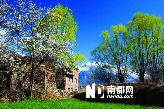 三月里,川西北的梨花盛放,寨子、碉楼、梨花……构成最美的丹巴风光。