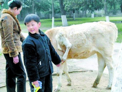 三个鼻子的猪、六条腿的牛、四条腿的鸡和鸭,畸形动物频频出现的原因,主要是人类造成的污染。