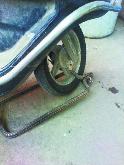 霸气十足的车锁
