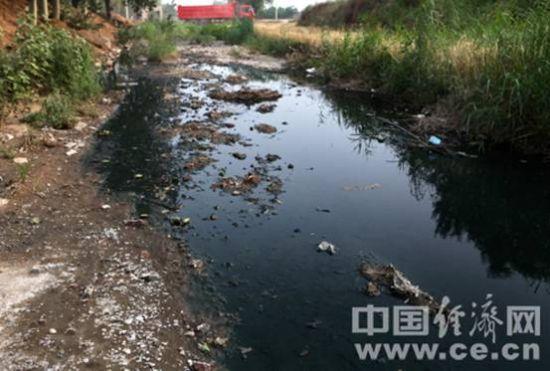 原本已经干涸的河道内现在满是阳光华泰排出的污水