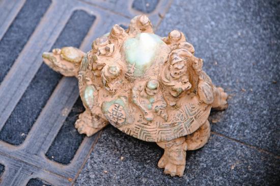 乌龟长约20厘米,高约10厘米