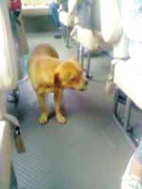 小狗在客车上寻找主人