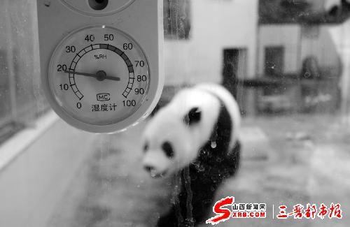 图为熊猫馆