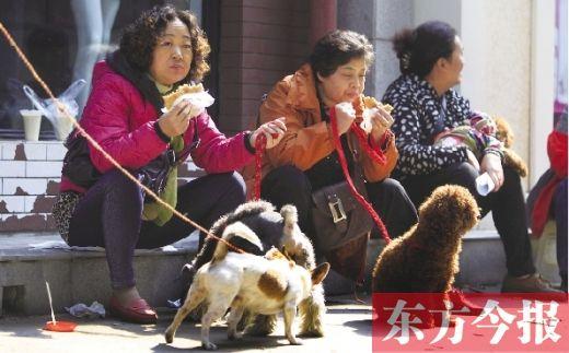 """昨日,郑州市黄河南街与同乐路交叉口一办证点,排队给狗狗办证的市民为不耽误下午排号,马路边""""将就""""午餐"""