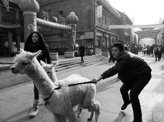 商场抢占节日市场用羊驼吸眼球。