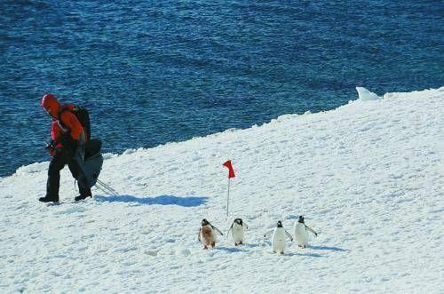 冰雪世界的南极不再是梦