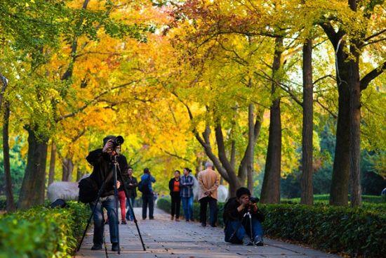 明孝陵景区的石象路是我国著名的