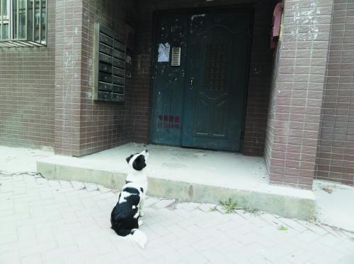 早晨6时左右,家住泡崖八区玉浓街的王学杰会准点下楼,然后步行10分钟,来到八区幼儿园附近坐班车。而每天这个时候,一只叫花花的斑点狗已经坐在了楼门口。