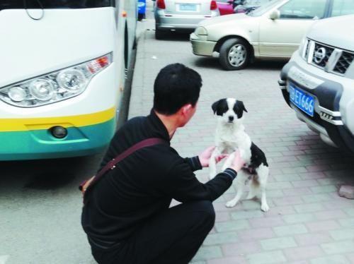 """每次上班车前,王学杰需要和花花""""握握手"""",然后说句""""你回去吧"""",它才会乖乖地离开。"""