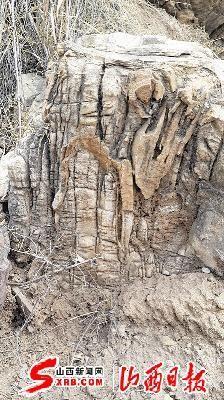 一处古树木化石局部。