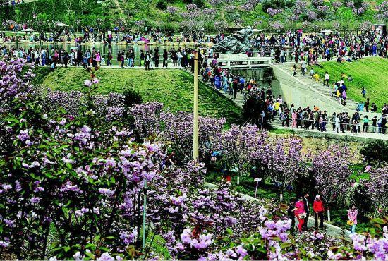 赏花游客排起长龙