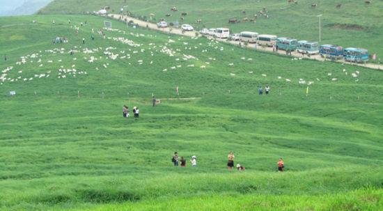 盘石园区2.3万亩〝黔东草海〞美景如画