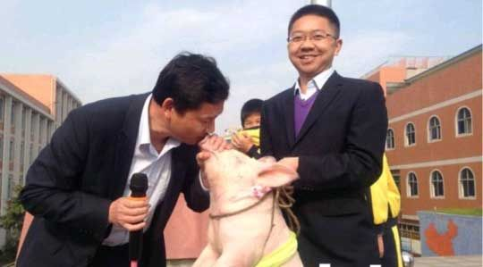 校长兑现承诺现场亲吻小猪