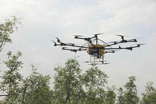 无人旋翼施药机正在为枣林喷洒农药