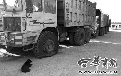 被交警查扣的案件标的物工程车前轮胎被放掉气 华商报记者 王培民 摄