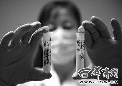 法医物证司法鉴定所副主任医师张晓楠女士,拿起两份不同的碎骨标本,准备进行DNA比对 华商报记者 于卓 摄