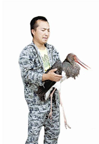 图为陈海云小心地抱着受伤的黑鹳。