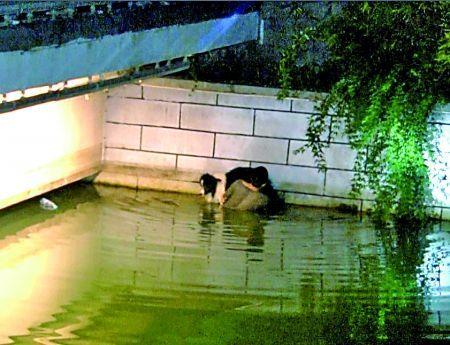 南川半溪河,男子托着爱犬等待救援。