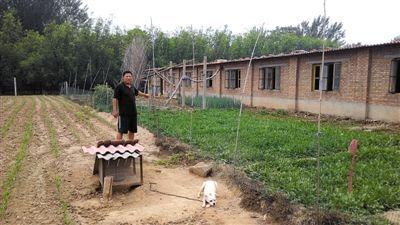 郑立海身旁的菜地里,村长侯志强被打死。由于侯志强吃了郑家的4条大狗,郑家只好养宠物犬看家。