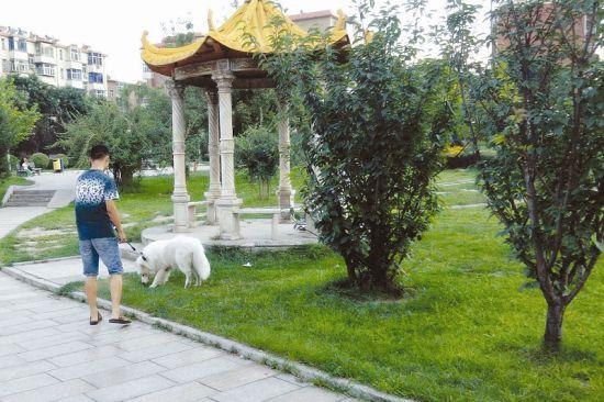 8月17日,太原市西矿街的一街心公园里,附近的居民正在遛狗。 郭 艳摄