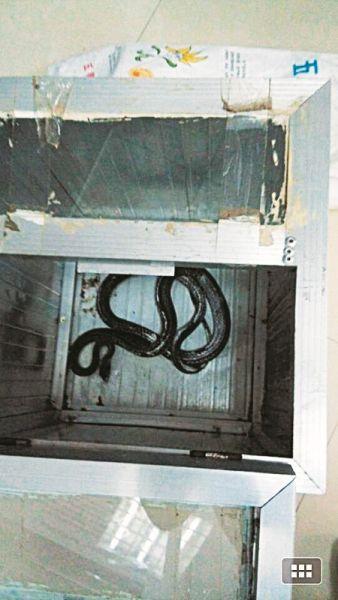 被装入玻璃箱内的蛇。