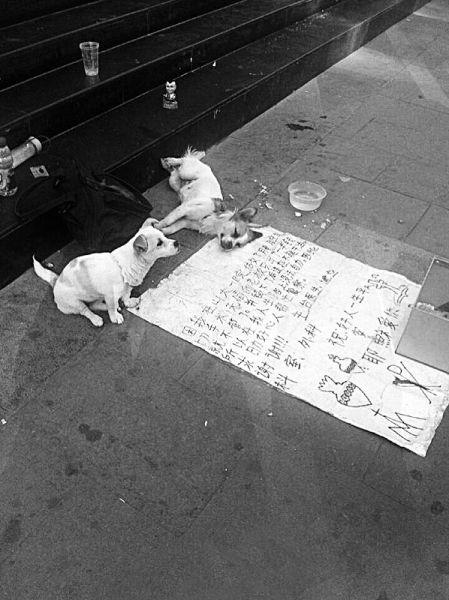 两只狗狗守在求助书前。