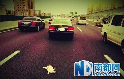 """被""""虐猫""""者抛弃在上海高架桥上的小猫。 微博图片"""