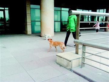 流浪狗在行人间来回溜达。