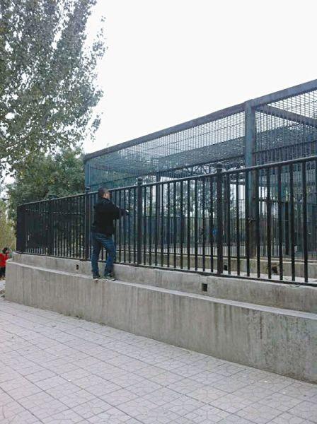 熊区护栏外,一男子不仅踩上水泥隔离台,还将手伸进护栏