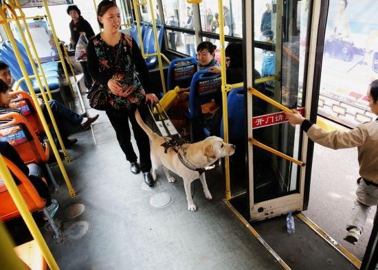 导盲犬和主人在公交上