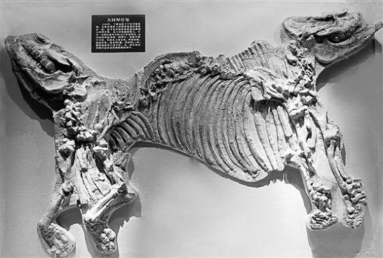 """动物化石重点保护区"""",榆社藉此成为全球研究新生代"""
