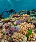你可能见不到大堡礁了